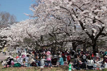 桜の木の下-3(20180328).jpg