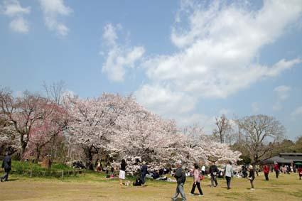 桜狂宴-3(20190406).jpg