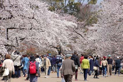 桜狂宴-4(20190406).jpg
