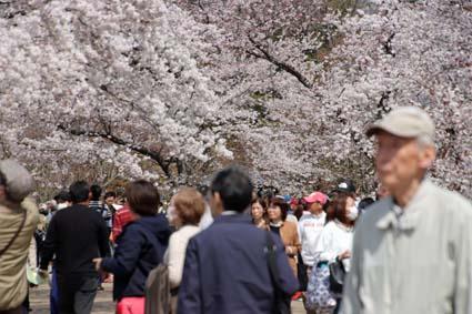桜狂宴-5(20190406).jpg