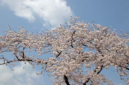 桜狂宴-6(20190406).jpg