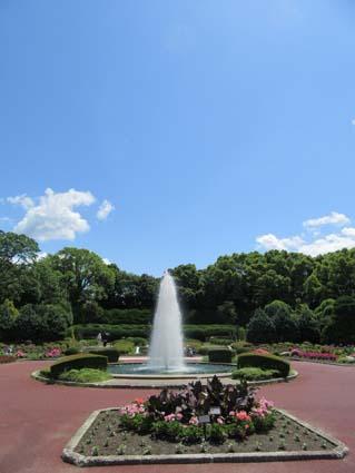 植物園-1(20170602).jpg