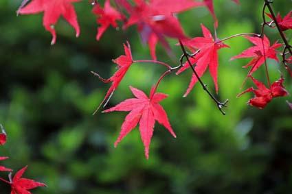 植物園の紅葉-6(20181123).jpg