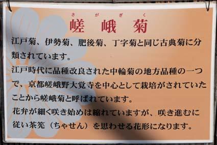 菊花展-2(20171107).jpg