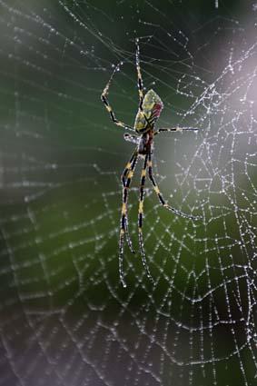 雨の日の蜘蛛-3(20171021).jpg