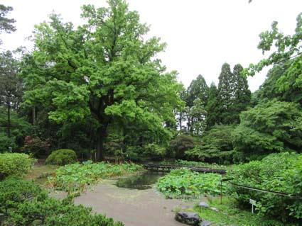 雨の植物園-1(20170525).jpg