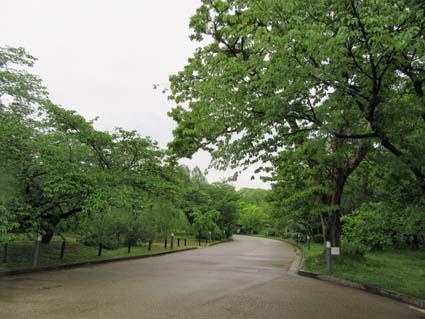 雨の植物園-2(20180424).jpg
