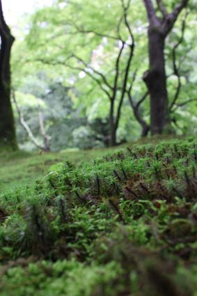 雨の植物園-3(20170630).jpg