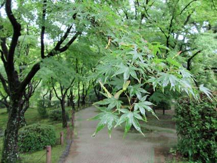 雨の植物園-7(20180606).jpg